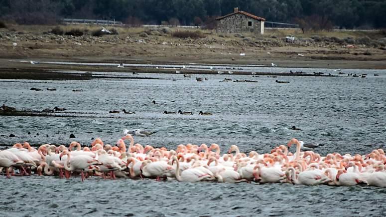 Flamingo site γνωριμιών χάκερ dating